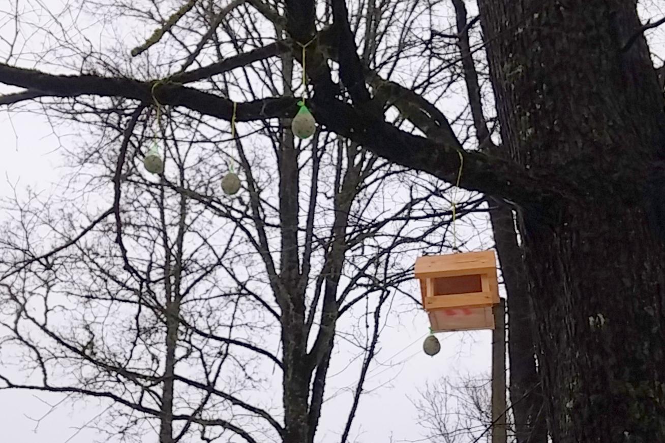 Linnumaja on sulelistele avatud